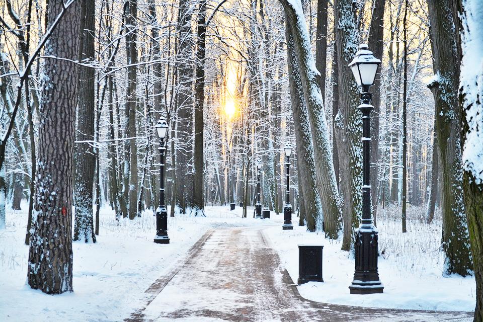 «Пироговский лесопарк» скоро преобразится