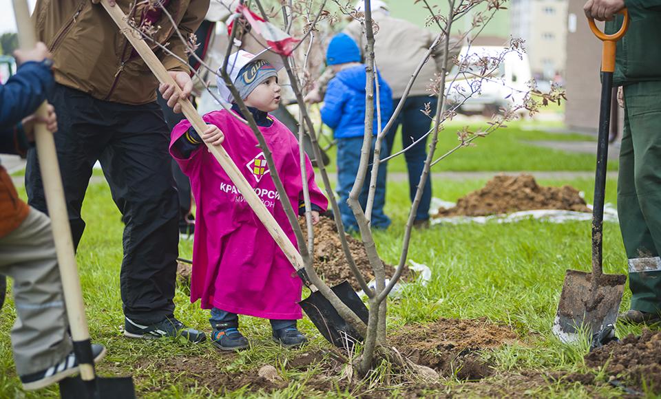 Посади дерево в своем районе